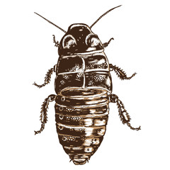 Color cockroach hand drawn. Isolated insect with wings on white background for Halloween. Vector.