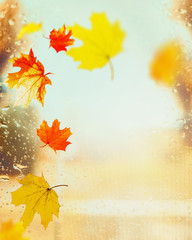 Colorful autumn leaves on window with rain drops at autumn nature background