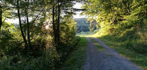 Wald mit Wanderweg