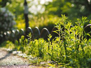 plants in sun in Kyoto