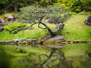 small tree in Nara Park with lake
