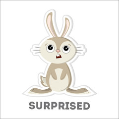 Isolated surprised rabbit.