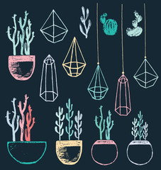 Succulents and Cacti in Pots and Geometric Terrariums Chalk Drawing Vector Set