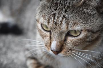 Close up a cat face.