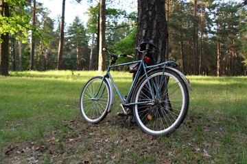 Vintage bicycle on the background of green coniferousforest