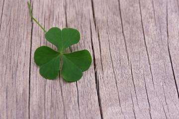 Shamrock. Shamrock leaf similar to heart green, put on a wooden floor.