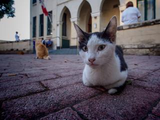 cat on floor in Sliema
