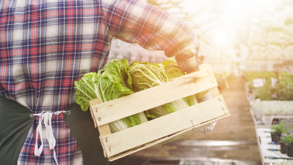Happy Farmer Walks with Box full of Vegetables Through Industrial, Bright Greenhouse.