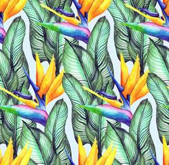 Foto op Plexiglas Paradijsvogel 1