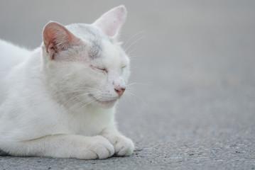 目を細める白猫