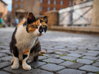 street cat in Rome