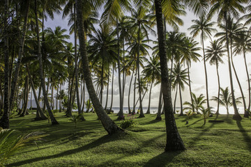 Coconut palm beach an sunset, Chuuk Lagoon, Micronesia