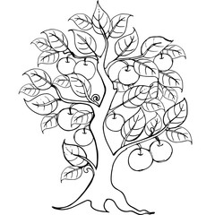 Hands drawing apple tree for the anti stress coloring page