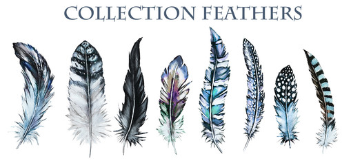 Watercolor collection of feathers. Illustration Isolated on white background. blue Feathers of different birds for decoration