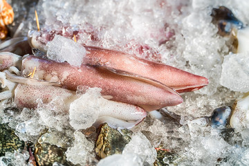 Fresh squids on ice