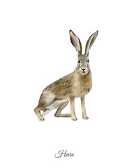 Handpainted watercolor poster with hare