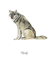 Handpainted watercolor poster with wolf