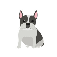 dog French bulldog sitting