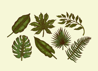 Tropical leaves collection. Engraved jungle leaves. Palm leaves.