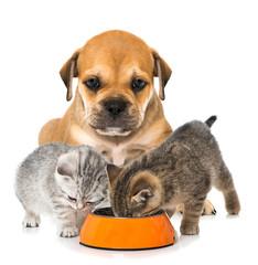 Welpe und Kätzchen mit Futterschüssel