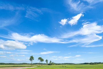 Landscape in the summer with white clouds