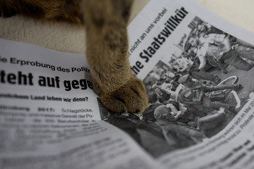Paw of cat on left wing newspaper
