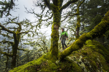 RUCKEL RIDGE, OREGON. A man hiking alone in the woods pauses to look through the big trees on a wet, foggy afternoon.