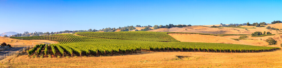 Sonoma County California Wine Country Panoramic