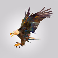 isolated picture of a bird attacking an eagle