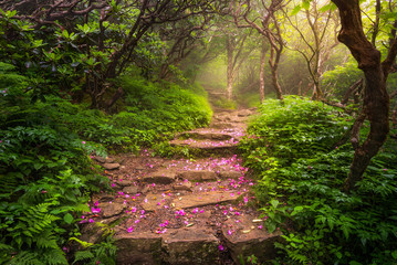 spent rhododendron blooms line the trail, blue ridge mountains, north carolina Wall mural
