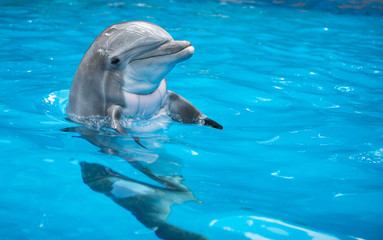 Foto op Aluminium Dolfijn Baby Dolphin