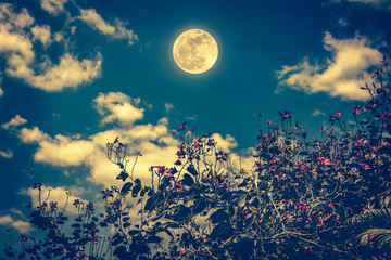 Wall Mural - Flowers blooming against night sky and clouds with full moon. Cross process
