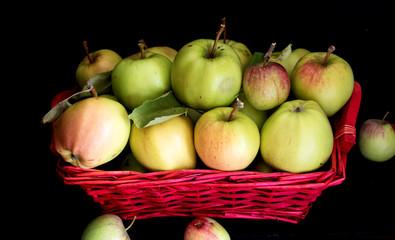 ein Körbchen mit frisch gepflückten Sommeräpfeln