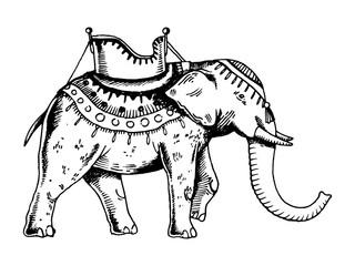 Indian elephant engraving vector illustration