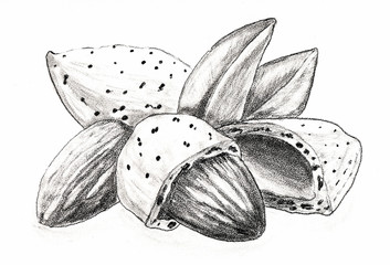 Nuts Almond in shell. Hand pencil drawing