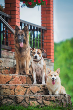 Group of dogs sitting on the stairs