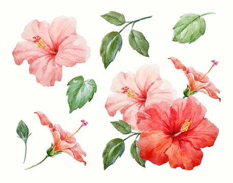 Watercolor tropical hibiscus flower
