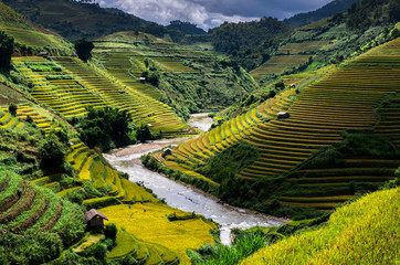 Acrylic Prints Rice fields Rice fields on terraced of Mu Cang Chai District, YenBai province, Northwest Vietnam