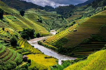 Autocollant pour porte Les champs de riz Rice fields on terraced of Mu Cang Chai District, YenBai province, Northwest Vietnam