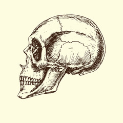 Skull profile, hand drawn doodle, sketch in woodcut style, black and white vector illustration
