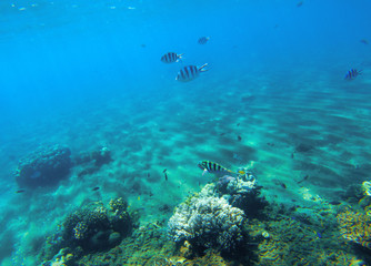 Underwater landscape with coral reef. Hard coral shapes. Coral fish undersea.