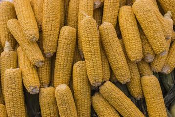 Piled Raw Corn on the Cob