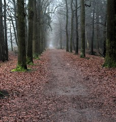 Forest path the veluwe