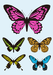 colorful Butterfly design icon set, vector Illustration