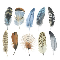 Vector bird feather from wing isolated. Aquarelle feather for background, texture, wrapper pattern, frame or border.