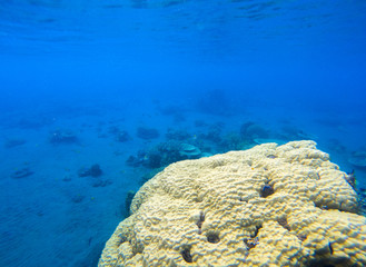 Coral seaworld in tropical seashore. Undersea landscape photo. Fauna and flora of tropical shore.