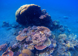 Coral reef underwater photo. Snorkeling in tropics.