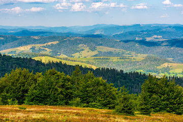 forest on a hillside of Carpathian Mountain Ridge