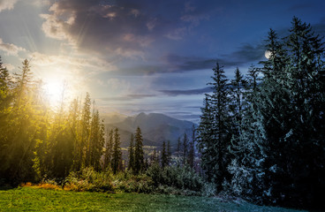Spruce forest in High Tatras time concept