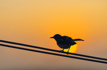 silhouette bird perched on electric cable at sunset with golden hour and the sun so beautiful.